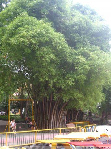 【转载】原创景洪街景(兰州园丁摄于云南) - 兰州园丁ljm44713 - 我的博客原创照片,欢迎指导