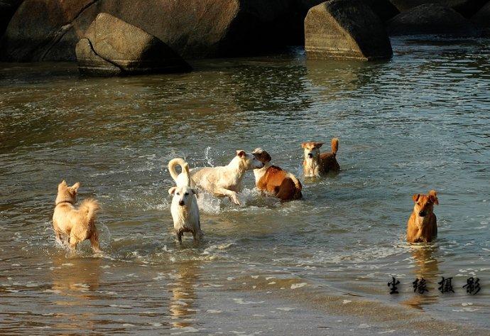 我和印度神牛一起在果阿晒太阳 - Y哥。尘缘 - 心的漂泊-Y哥37国行