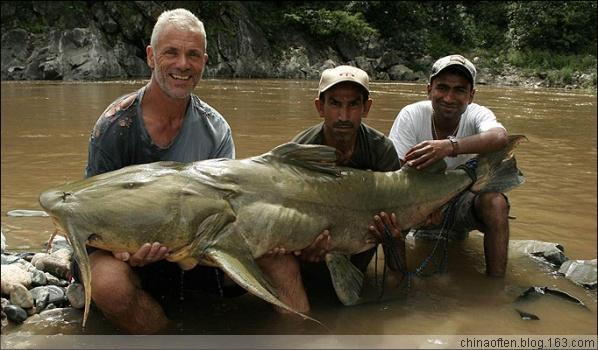 超清大图--印度鲶鱼基因突变爱吃人肉Humans scoffed by mutant fish - chinaoften - 奥风英语oftenenglish的博客