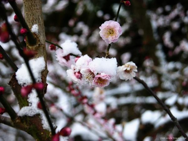 中华美德传统二十四孝图 - 温柔细雨 - 一丝小雨盈盈而落......