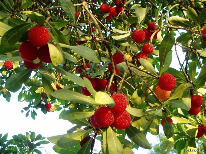各种水果的药理作用 - 温柔细雨 - 一丝小雨盈盈而落....