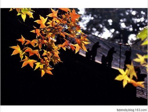配乐朗诵:故都的秋 - 风中白帆 - 风中白帆
