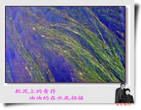 2009年2月7日 - 芳草萋萋68 - fangcaoqiqi68的博客