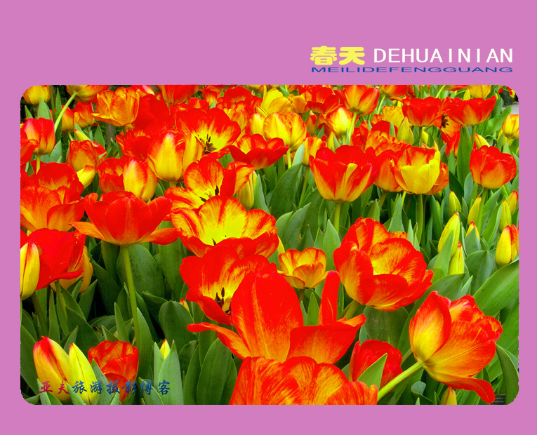 (原摄)春天的怀念 之三 - 高山长风 - 亚夫旅游摄影博客