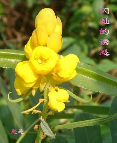百花争艳(一) - 憨憨 - 寻春