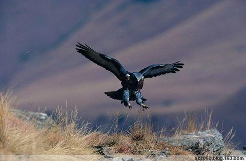 鹰之运 - 艾之宁耶 - 自由与和平.博客精神---艾之宁耶