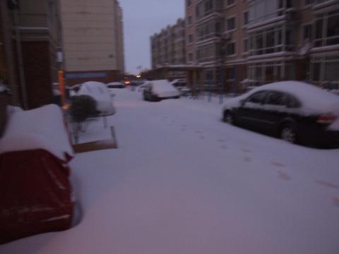 2009年的大雪 - 红叶疯了 - 红叶疯了