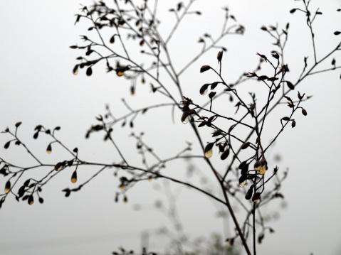 【诗词】秋爽 - 大漠孤烟 - 大漠孤烟的博客