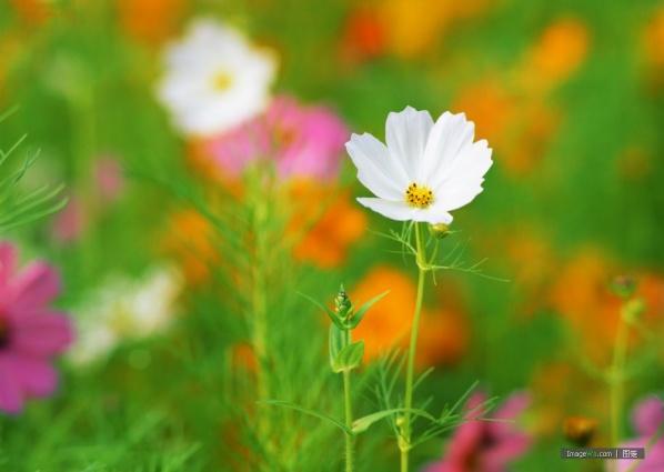 小野花也有芳名   - 玫瑰小手 - 陶然亭