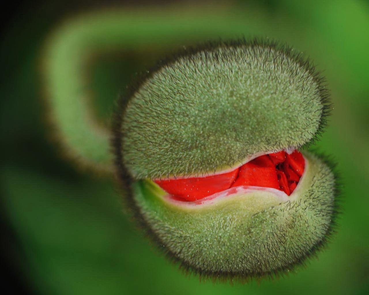 自然摄影 - 香儿 - xianger