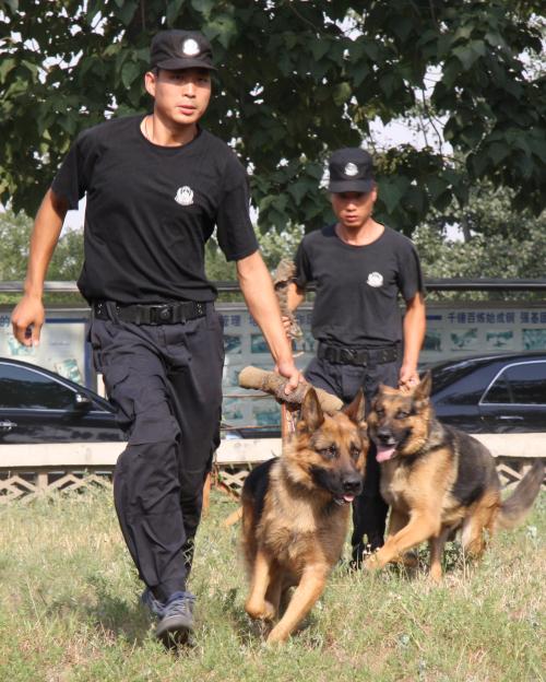 警犬训练掠影 - xt5999995 - 赵文河的博客
