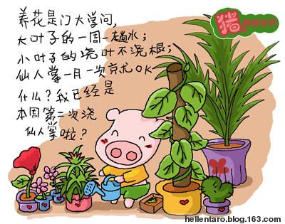 【猪眼看世界-生活】养花的大学问 - 恐龟龟 - *恐龟龟的卡通博客*