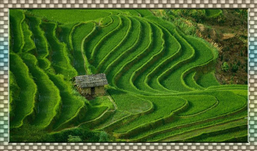 中华各地美丽梯田大集合---宽幅25p﹝沧海作品﹞ - 端木秀禾 - 端木秀禾的博客