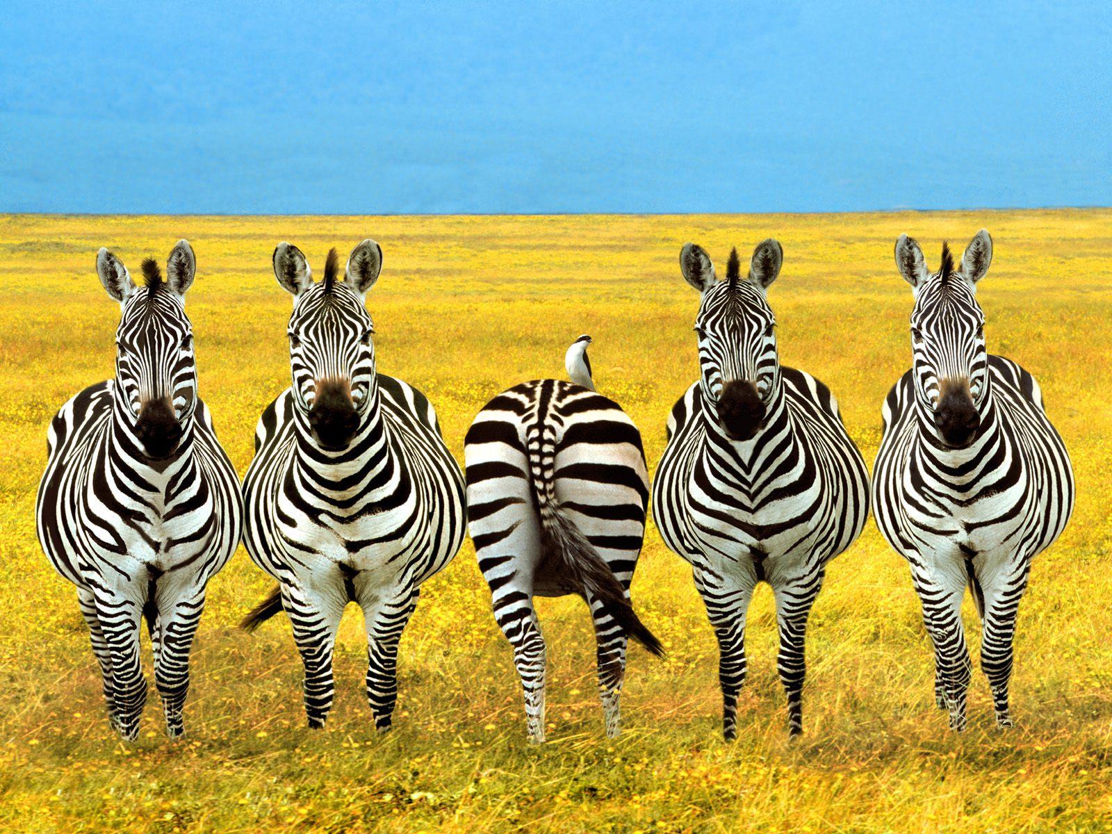 视觉大餐-动物世界  - 香儿 - .