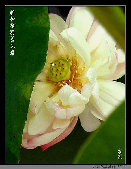 【七绝  咏荷十七韵】题凌寒摄影 - 寒泉 - 寒泉雅韵