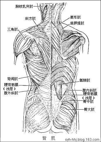 人体医学图解(转) - 山人 - zw1210.good的博客