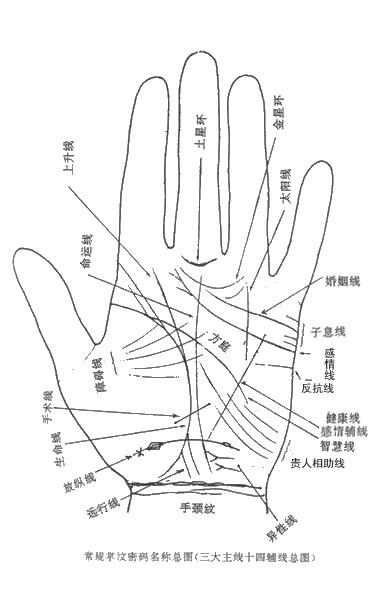 科学发现:掌纹判断未来 - 赵彦锋 - 赵彦锋