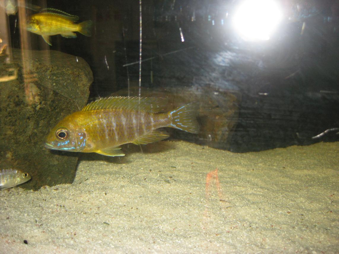 牧鱼水族库存部分三湖鱼类展示(09.11.19) - x-999 - 牧 鱼 水 族