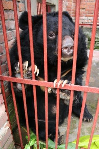 献给幸存黑熊的爱  - Jill - Jill的博客