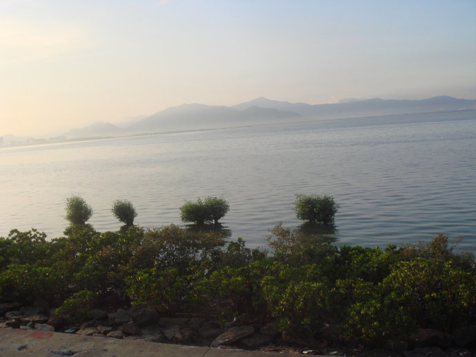 深圳红树林(一)