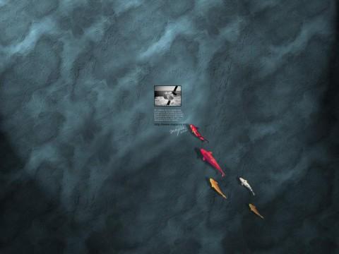 [酷站] 壁纸酷站推荐:WALLPAPER - 令冲冲 - 飞越梦想