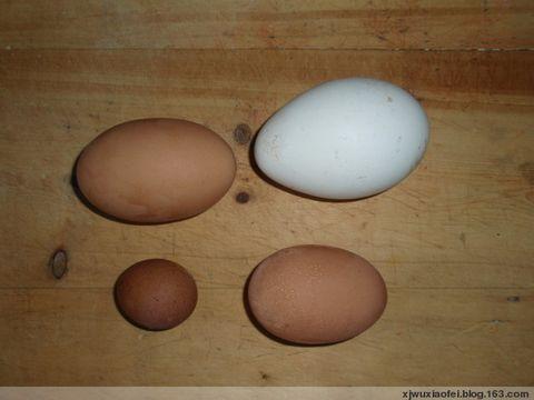 母鸡下铁蛋 - 红色毛芨芨 - 红色毛芨芨的博客