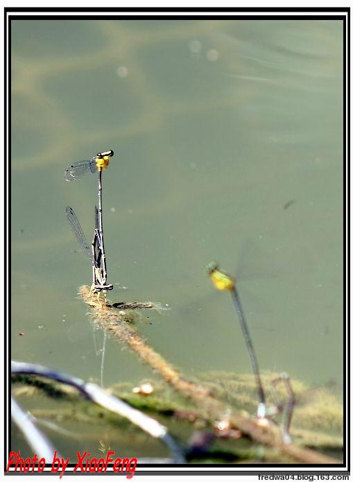 小塘掠影 - 曉風殘月 - 曉風殘月