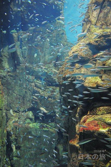 海洋世界真奇妙(一) - 喜琳 - 喜琳——传递爱与幸福的使者