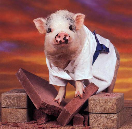 [漂 亮 的 猪 猪] - 红叶风萧萧  - 红叶风萧萧