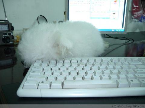 2009年2月11日 - 黑白 - 黑白博客