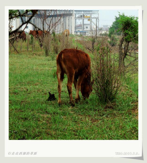 最后的牧牛图