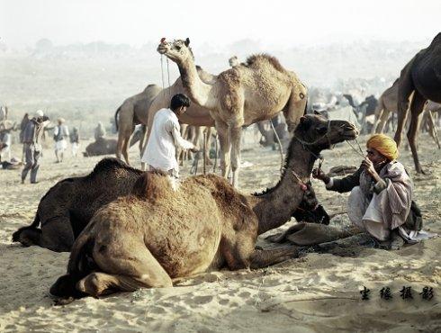 骆驼的盛会-布什格尔 - Y哥。尘缘 - 心的漂泊-Y哥37国行