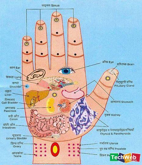 看手脚知健康 - 如 梦  -  如  梦