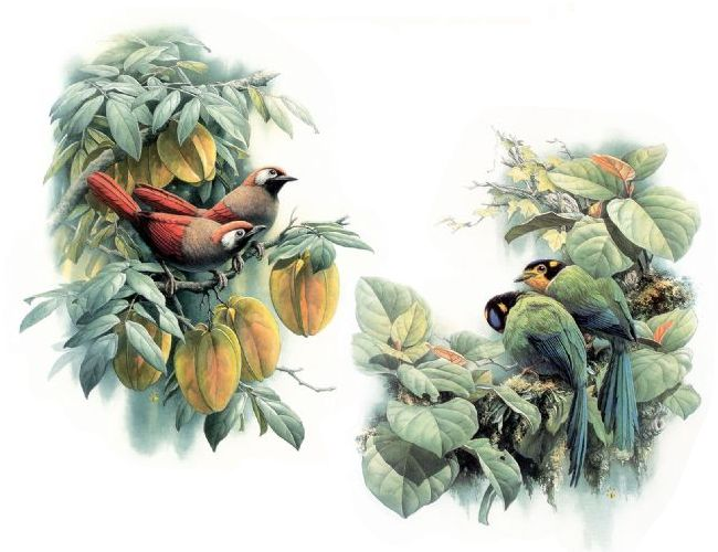 精 品 鸟 图 - 老寿星 - mayes321 的博客