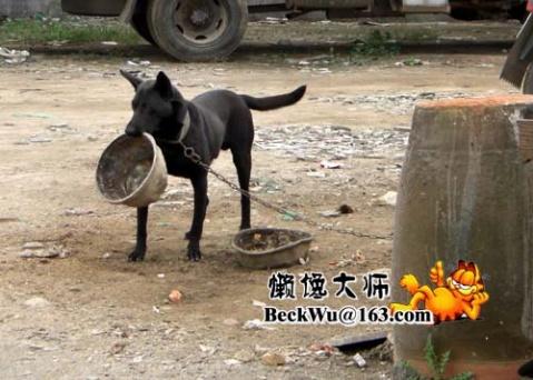 国庆长假之越野三人行3(10月5日)(6图+6视频) - 懒馋大师 - 懒馋大师的猫样生活