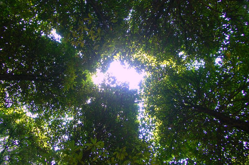 [原创]哭苏仙岭—— 冰灾记忆之十四 - 歪树 - 歪树