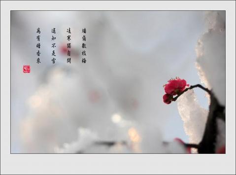 2009年1月19日 - gxh75638孤云野鹤 - 孤 云 野 鹤