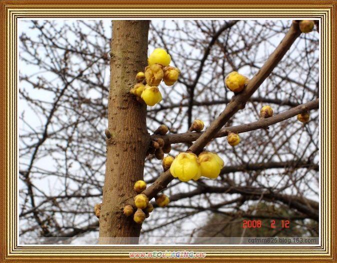 武汉 梅花节 2008 【PP】 - 【芳仙姑】 - 健康是最佳礼物  知足是最大财富