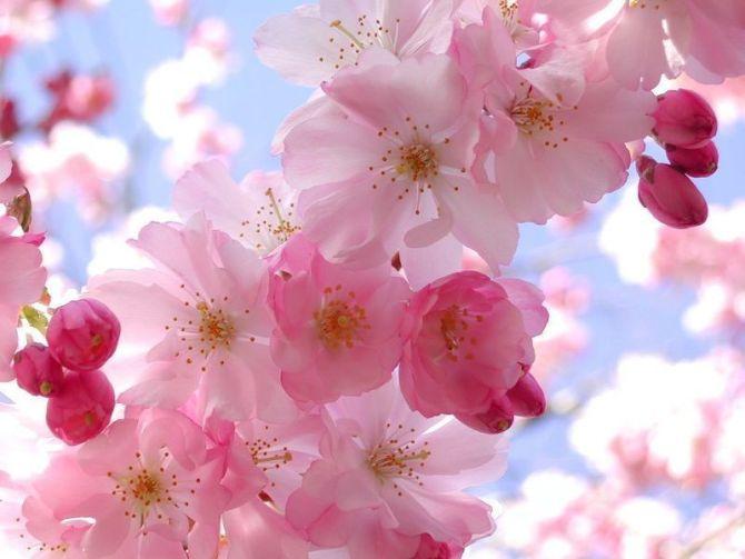 田园嗅吸桃红柳绿的韵味【原创诗】 - 高天流云 - 高天流云的博客