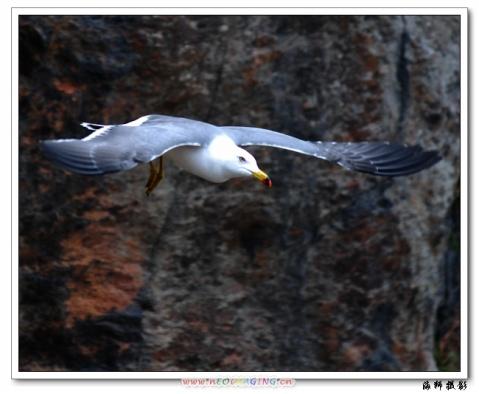 [原创]小岛掠影(之六) - 海狮 - 海狮de视觉空间