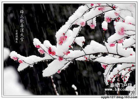【原创】七绝  梅  和平子回文诗(外一首) - 里歌 - 里歌博客