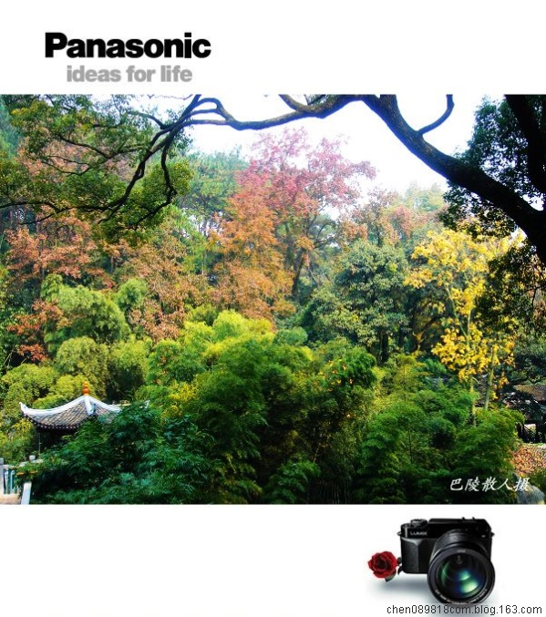 [原]风光摄影《岳麓山赏枫2》33p - 巴陵散人 - 巴陵散人影室