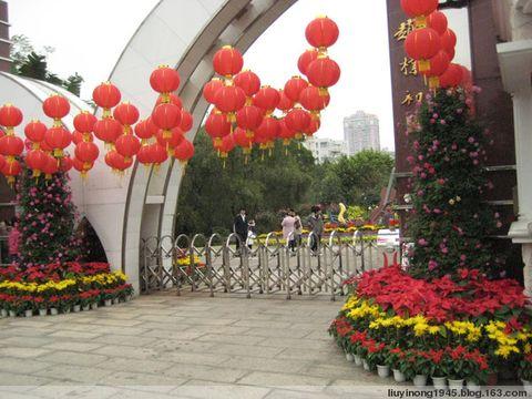 深圳人民公园11届月季花展 - 刘亦农 - liuyinong1945的博客