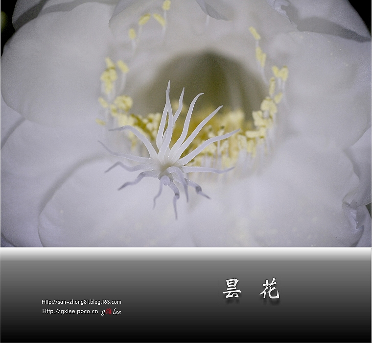 【转载】[原创]  再拍昙花(1) - zhchl - zhchl