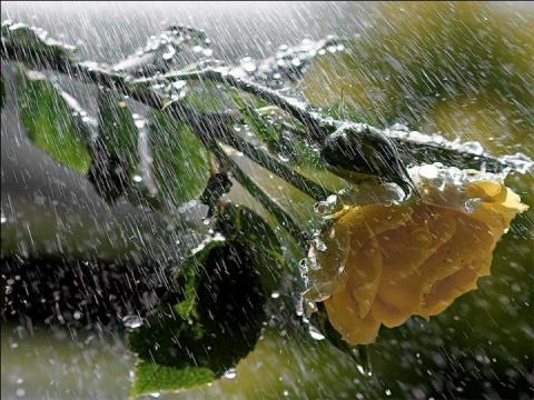 水 的 形 式 .(美图 )  - BAMBOO - 冰雪哈尔滨