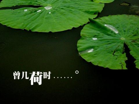 荷言荷语【组图】 - 無為居士 - 無為齋