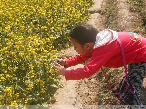 龙湾油菜花(图) - 温柔的月色 - Cactus的博客