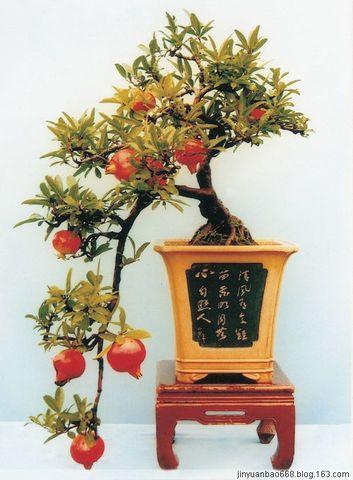 引用 中国盆景精品 - aqiao的日志 - 网易博客 - 萃文精选 - 萃文精选 博客文摘