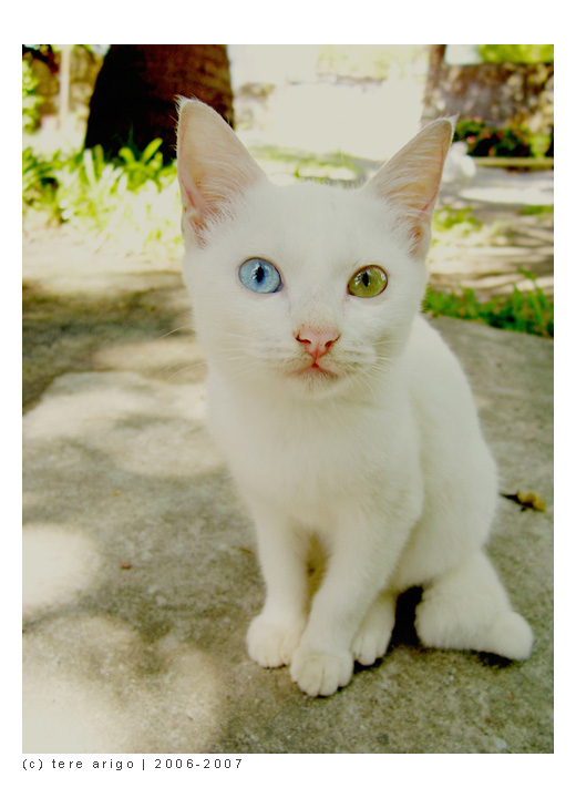 JUST CAT - SARA - JUST  SARA
