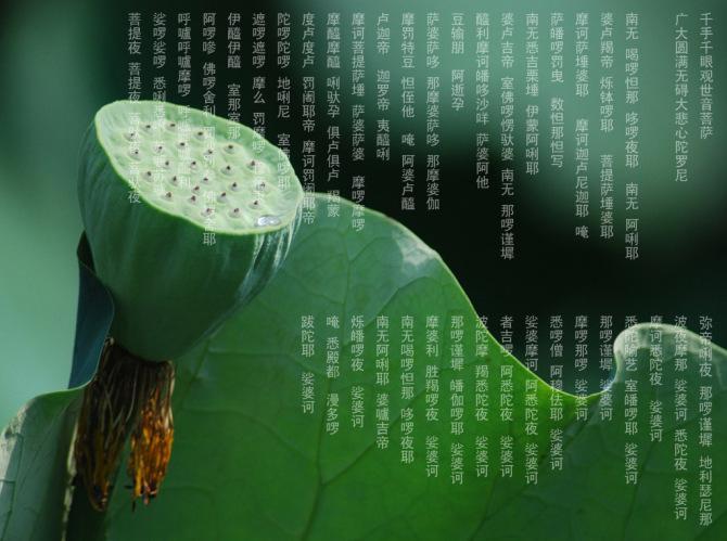 大悲咒--名贵兰花欣赏 - 春兰之馨香 - 香光庄严卍念佛三昧